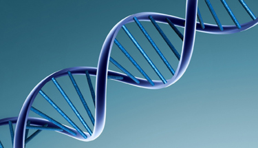 Gene causing motor development disorder found